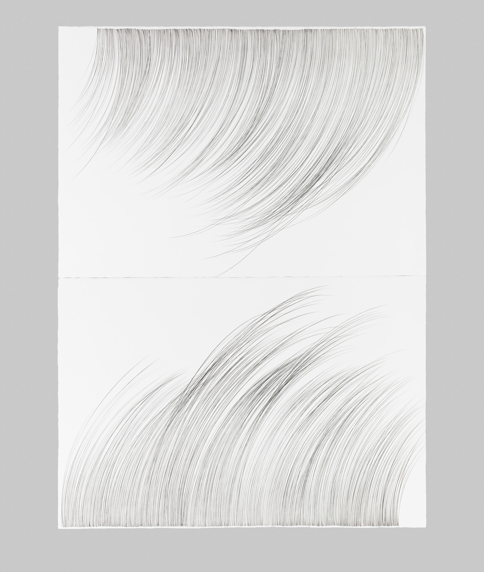 Large RainGrass, II   Graphite on cotton paper, 60 x 44 inches, diptych, 2015