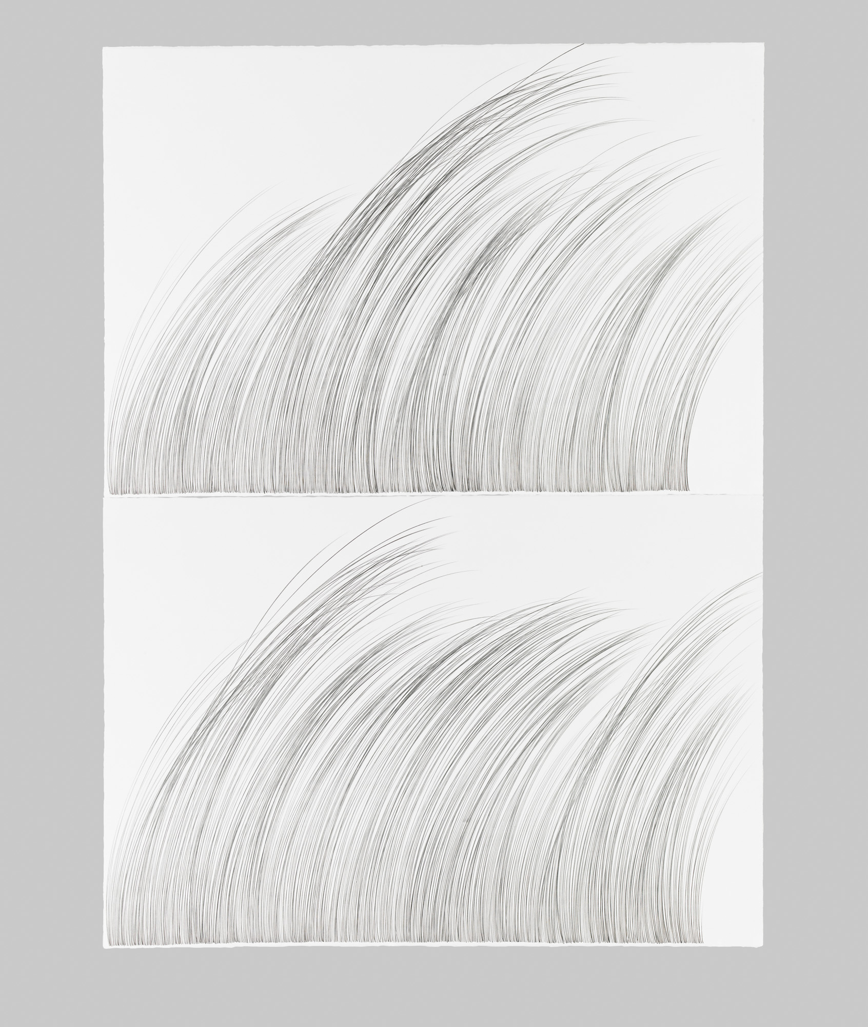 Large Grass   Graphite on cotton paper, 60 x 44 inches, diptych, 2015